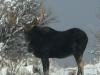 moose082